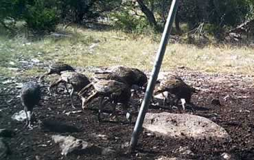 Hunting Property Texas Hill Country
