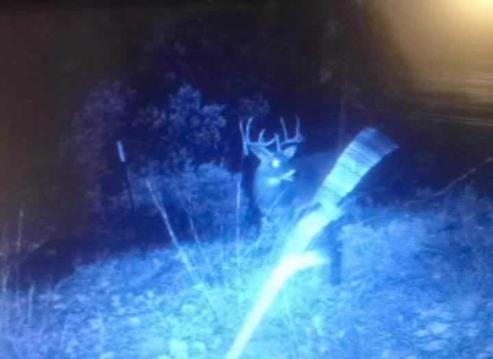 Whitetail Buck at Night
