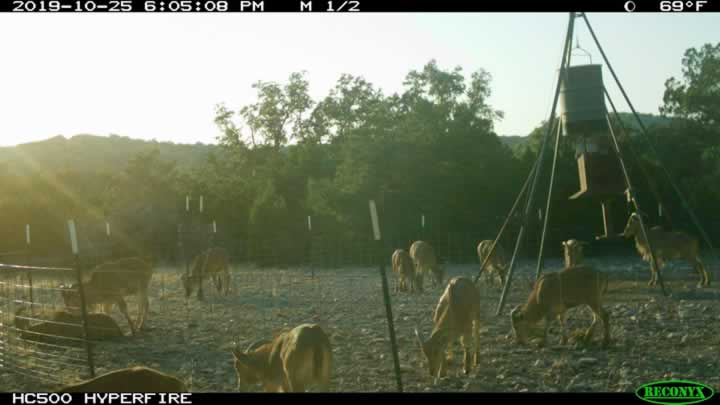 Aoudad Group