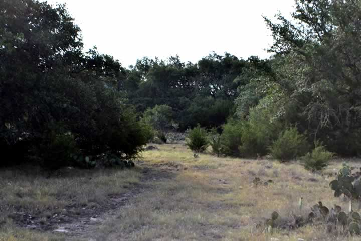 Road Through Vegetation