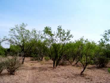 Fertile Mesquite Valley