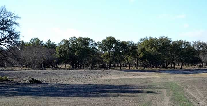 Abundant Topsoil and Oaks