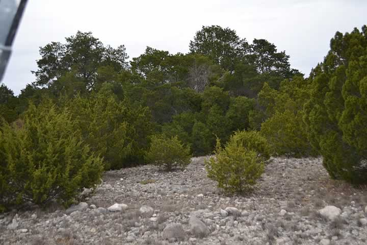 Mature Vegetation
